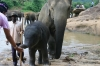 Mother, baby and mahout