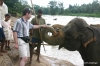 Lester, mahout and elephant