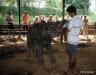 Feeding baby elephants,Pinnawala