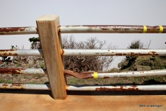 Rust due to acidic vog, Poas Volcano