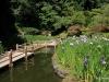 Iris Pond, Portland Japanese Garden