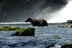 Alaskan Brown Bear at Devil's Falls