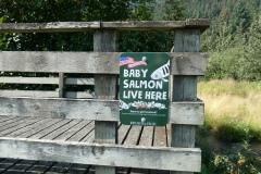 Spawning Salmon, Benny Benson Memorial, Seward