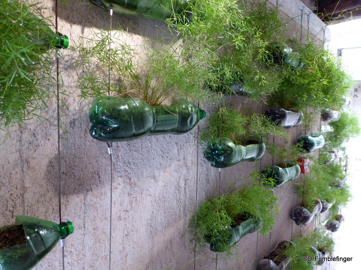 Recycling and plants as street art in the Al Fahidi Historic Districtt