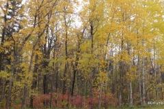 Fall colors, Birds Hill Provincial Park