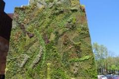 Great Fauna Wall, Madrid