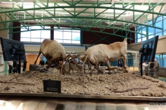 Whitehorse Airport, baggage claim
