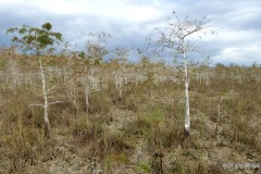 Pinelands Trail, Everglades National Park