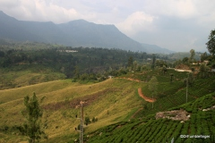 St. Clair tea plantation and waterfall, Sri Lanka