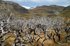 Remnants of a Wildfire, Torres Del Paine NP, Chile