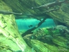 Great Lakes fish tank
