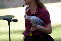 Bird show, San Diego Zoo Safari Park