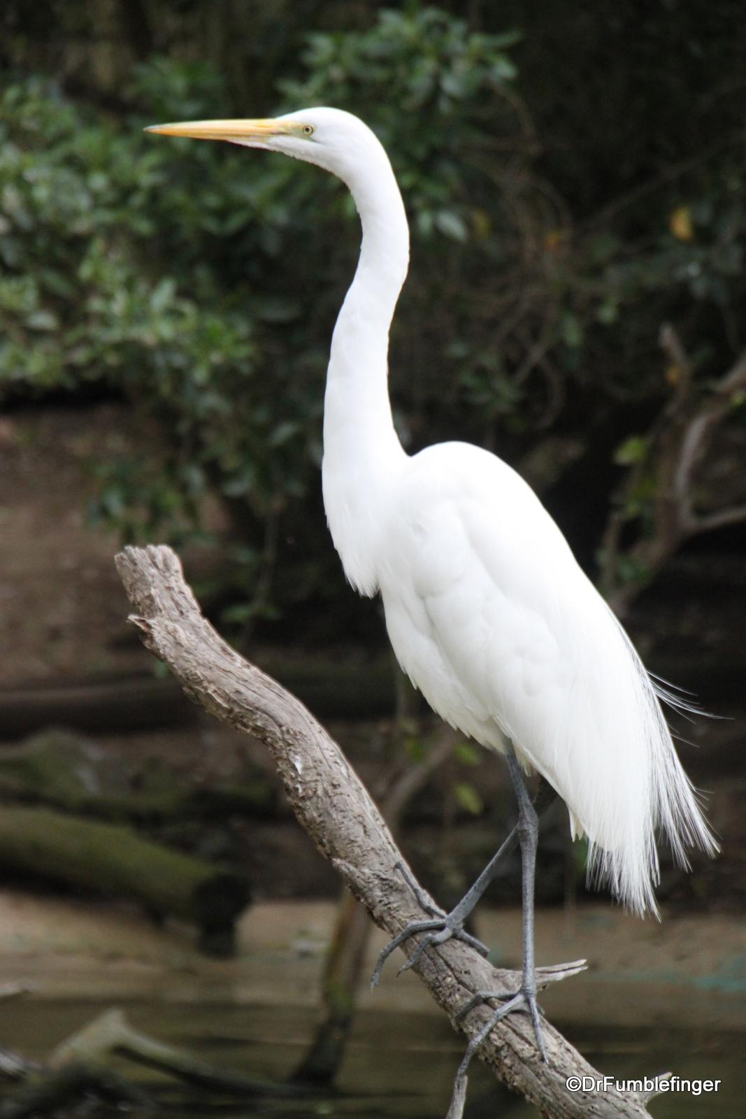 San Diego Zoo, Egret