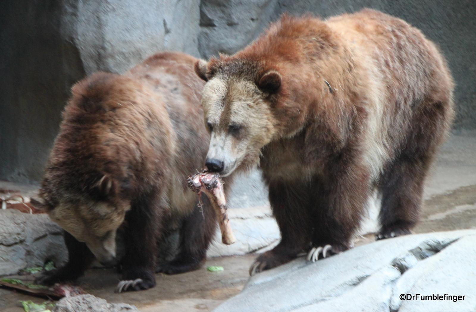 San Diego Zoo, Grizzly bears