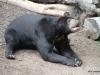 San Diego Zoo, Bornean sun Bear