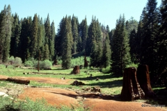 Stump Basin.  Where some of the sequoias were logged