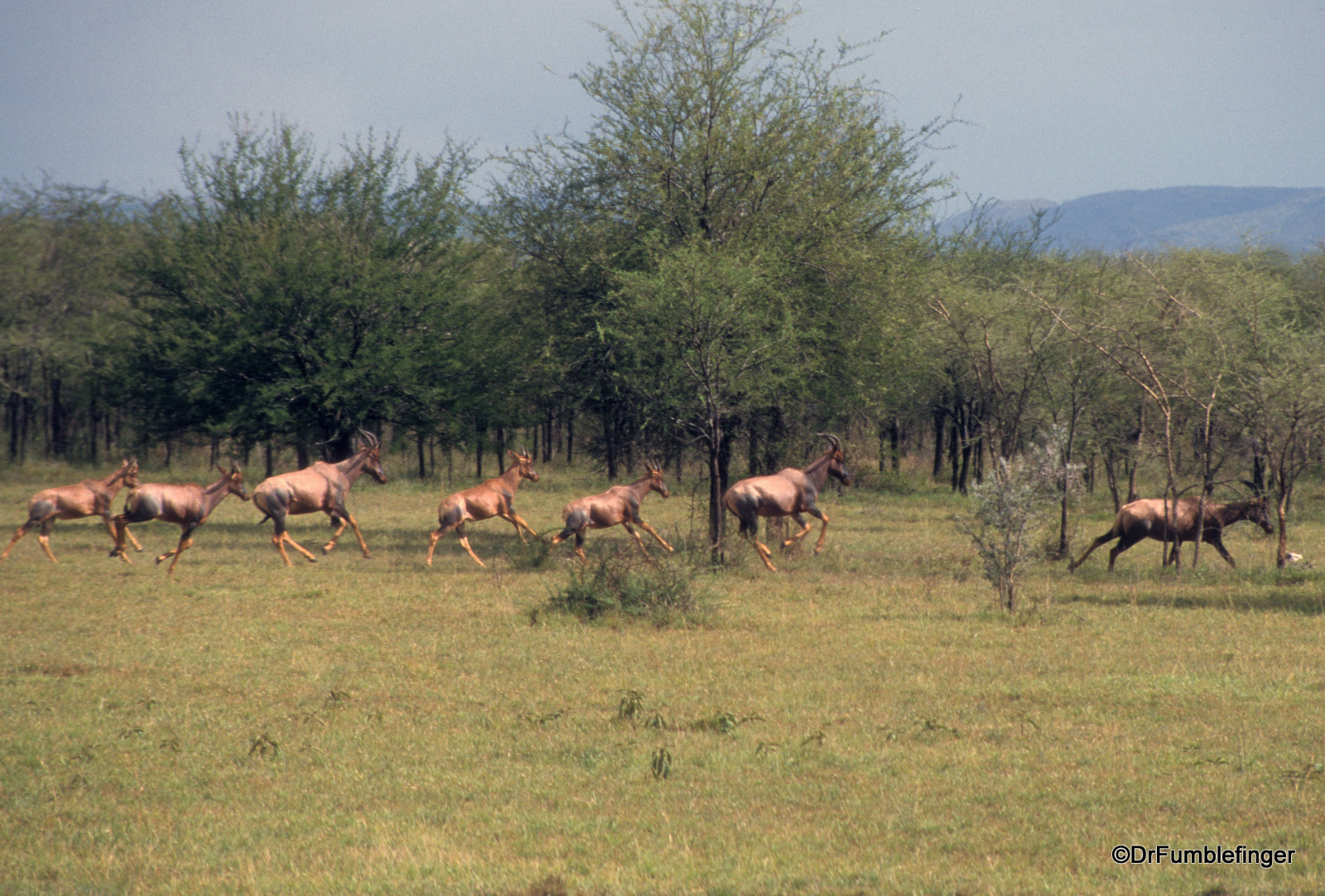Serengeti National Park, Topis