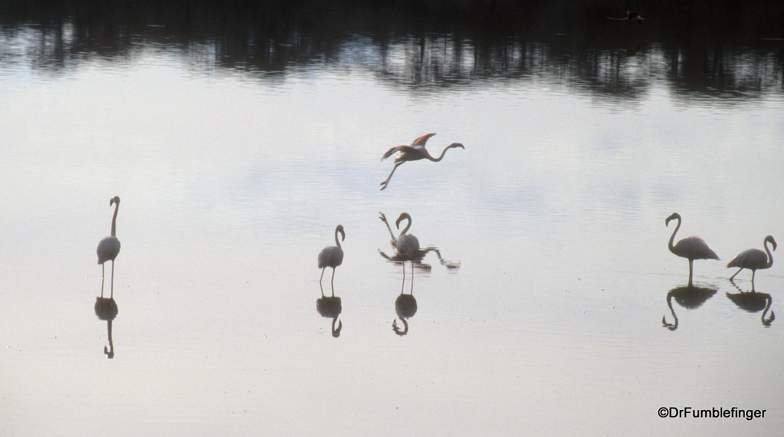 Serengeti National Park, Flamingos