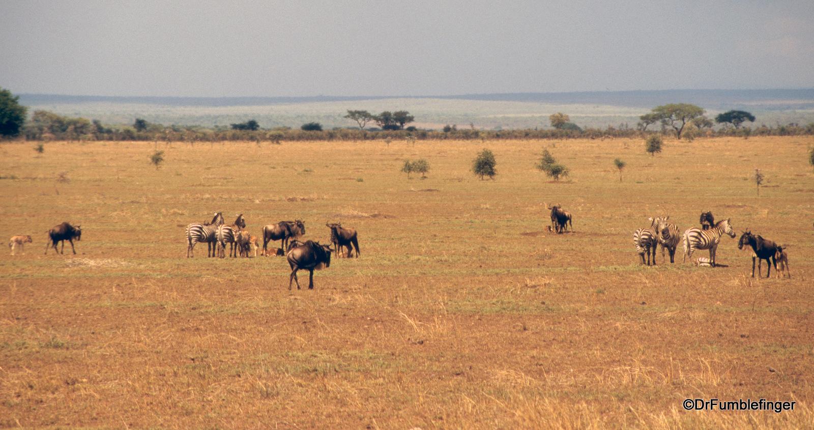Plains of Serengeti National Park,