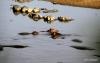Serengeti National Park, Hippo Pool & Crocodile