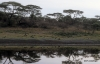 Reflections of Serengeti National Park,