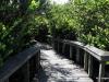Shark Valley. Bobcat Trail