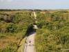 Tram Trail, Shark Valley, Everglades N.P.