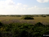 Views of Everglades from Observation Tower