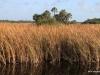 """""""The River of Grass"""", Florida's Everglades"""