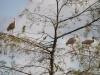 Ibis, Everglades N.P.