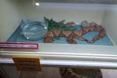 Exhibits, Shepherd of the Hills Fish Hatchery