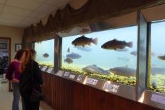 Fish Tank, Shepherd of the Hills Fish Hatchery