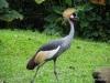 Singapore Zoo -- crane