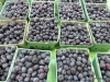 Blueberries, St. Catharines Market