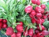 Radishes, St. Catharines Market