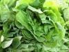 Lettuce, St. Catharines Market