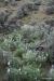 Steamboat Rock -- Prairie Lupins