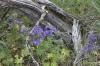 Steamboat Rock -- Wildflowers