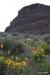 Steamboat Rock & Balsam arrowroot