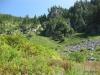 Trail to Stevens Lake