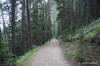 Trail up Sulphur Mountain