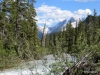Yoho River and in the distance, the Yoho Glacier, Yoho National Park