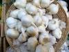 Garlic, the Forks Market, Winnipeg