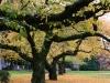 Fall colors, University of Washington, Seattle