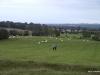 Pastoral land, Tara Hill