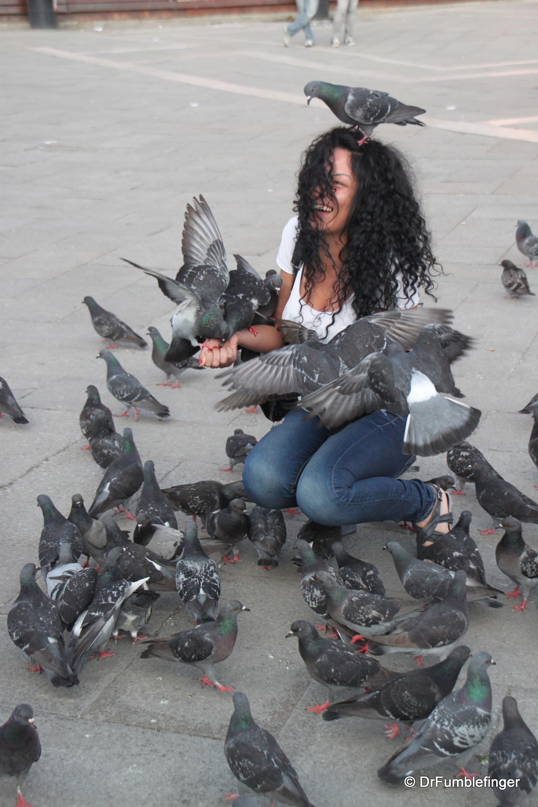 Pigeons, St. Mark's Square