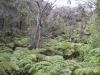 volcanoes-national-park-2011-022