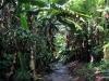 Wahiawa Botanical Garden, Oahu