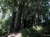 33-wahiawa-botanical-garden