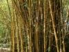 36-wahiawa-botanical-garden